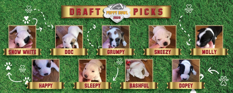 Meet the Dogs Participating in the Puppy Bowl