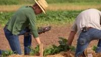 Fighting Hunger: Urban Farming in Fort Worth's Food Desert