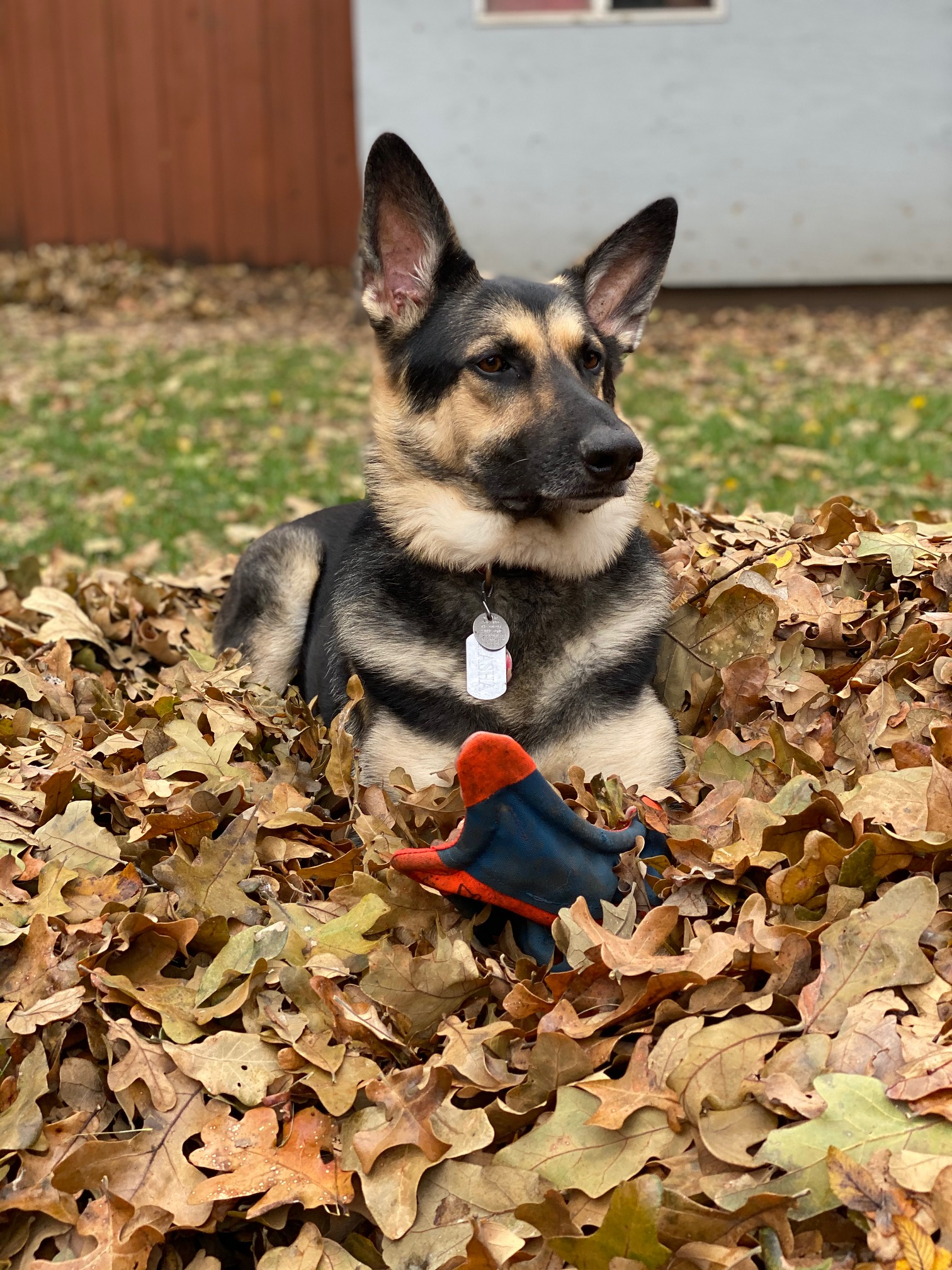 Your Fall Photos 2019 Nbc 5 Dallas Fort Worth