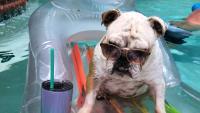 Dog Days of Summer 2020 – Gallery II