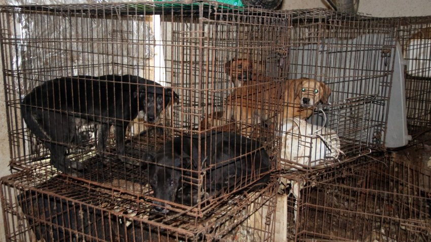 The SPCA of Texas and law enforcement seized more than 100 animals from a Hunt County property on Feb. 19 and 20.