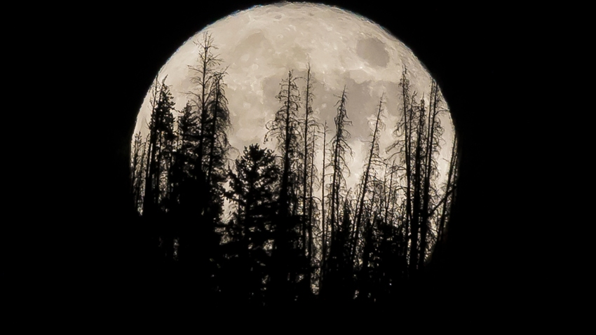 Evergreen trees are silhouetted on the mountain top as a supermoon rises over over the Dark Sky Community of Summit Sky Ranch