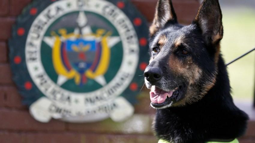 Colombia Threatened Drug Dog