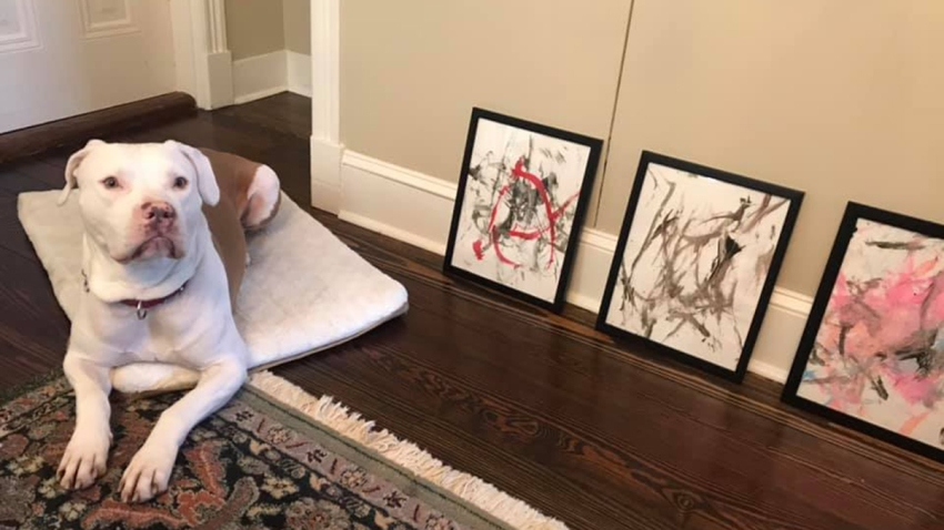 "An up-and-coming four-legged artist in Virginia has raised $4,000 for the Animal Welfare League of Alexandria. Under the nickname ""Ricasso,"" the precocious 6-year-old Staffordshire terrier sold nearly 20 pieces in his debut collection."