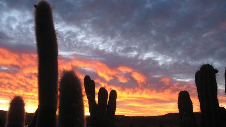Cactus-garden-sunrise