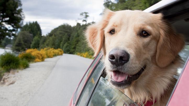 Dog-in-Car2