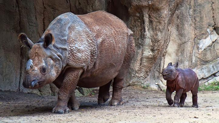 FTWZoo-baby-rhino-(5)