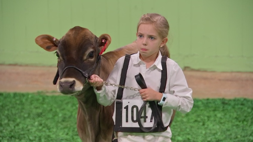 Fort Worth Stock Show & Rodeo Junior Dairy Cattle Competition Puts Spotlight on the Future