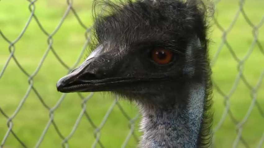 File Emu