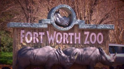 Fort Worth Zoo Announces Name of Newest Giraffe Calf