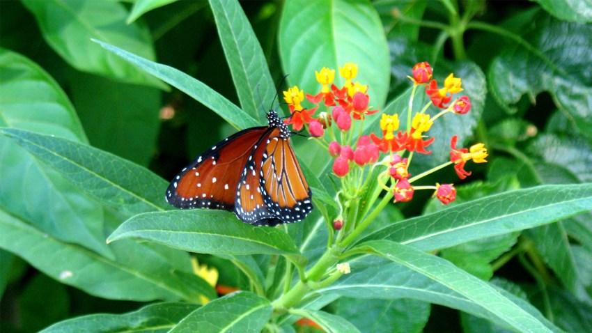 butterfly on flower at heard museum