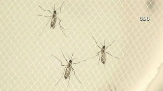 Mosquitoes-021615