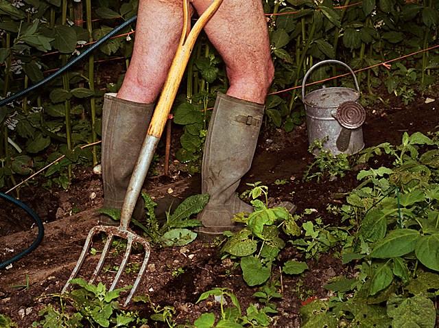 Old Naked Man Gardening