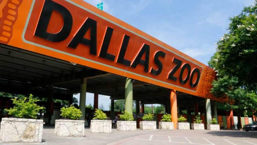 PRINCIPAL-foto-de-dallas-zoo-zoologico-de-dallas