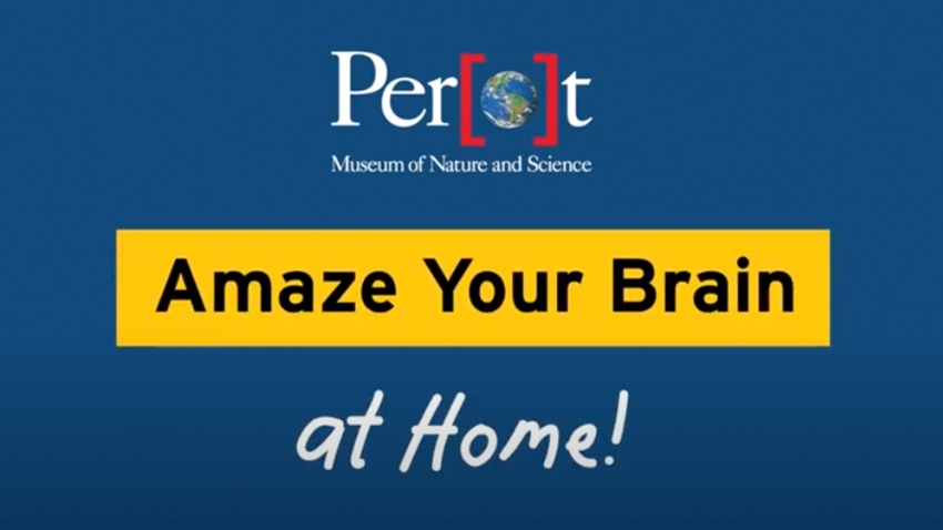 Perot Amaze Your Brain at Home