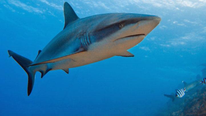 Shark-Week-blurb-722-406