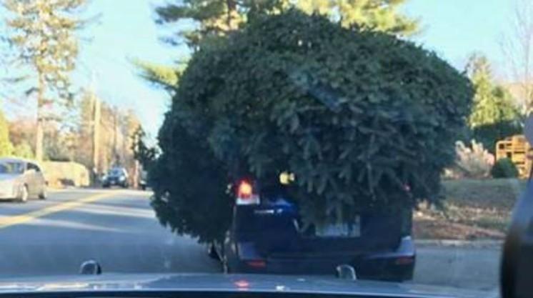 Sudbury Car Tree