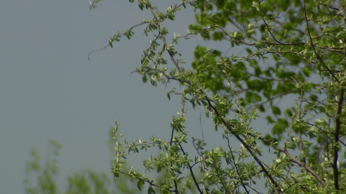 COVID-19 or Allergies? CDC Warns Allergy and Asthma Patients to Monitor Symptoms -Fort Worth thumbnail