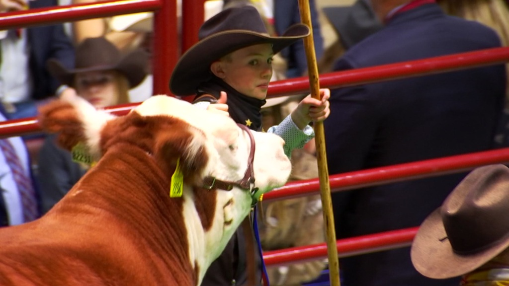 Ryder Day, 12, shows off his Hereford 'Cupid Shuffle'. The Grand Champion Steer sold Saturday for $300,000, the highest amount ever paid in the Junior Steer Competition.