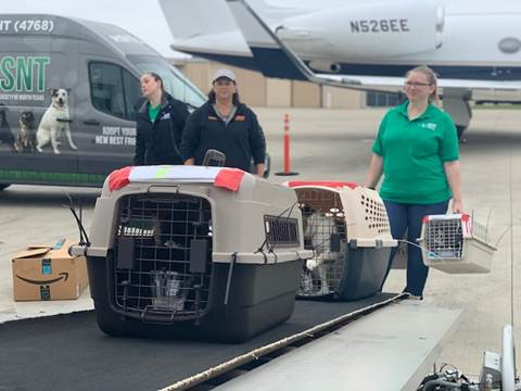 pets getting on to plane