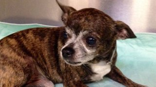 Dallas Animal Services Urges Adoption, Issues 'Red Alert'