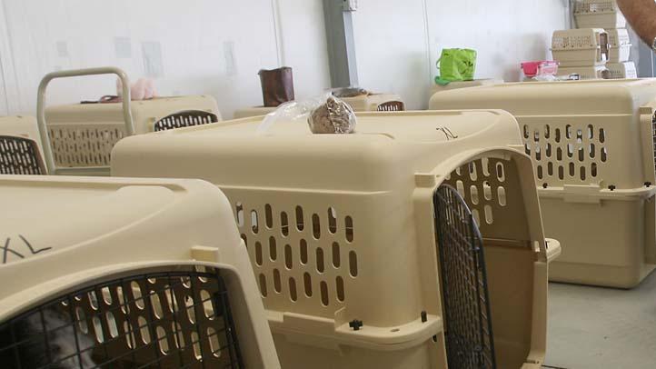 Empty Dog Crate