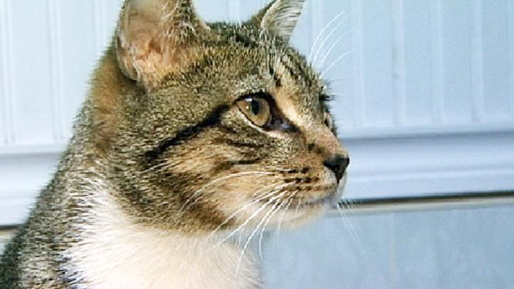 fios rescued cat verizon workers