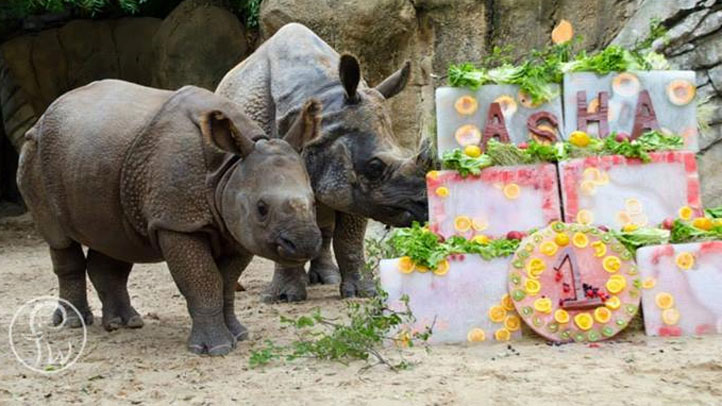 fort-worth-zoo-asha-birthday-081613
