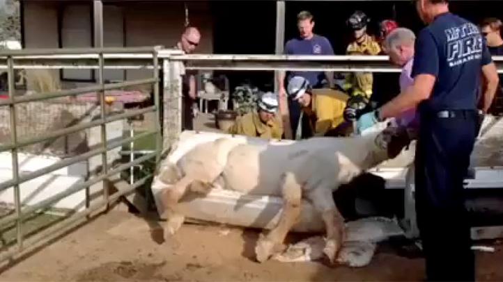 horse-tub