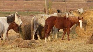 horses-generic