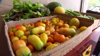 McKinney Garden Donates Everything It Grows