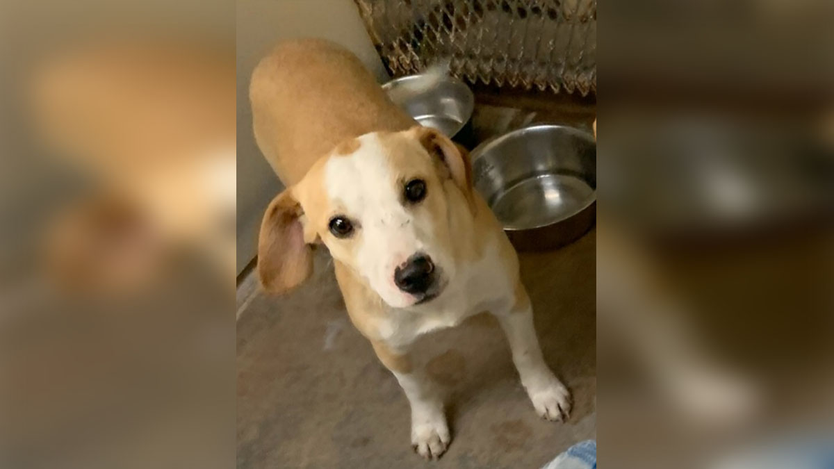 Visitors to Erath County Shelter May Have Been Exposed to Rabid Puppy