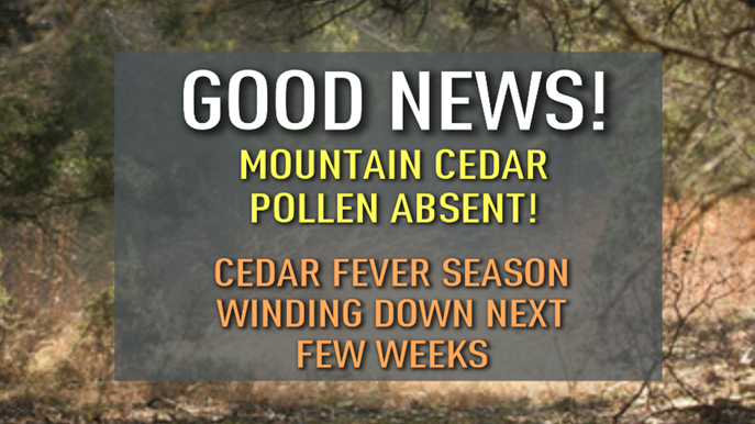 mountain-cedar-gj