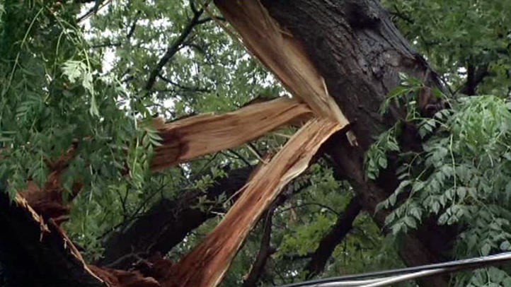 oncor-tree-051111