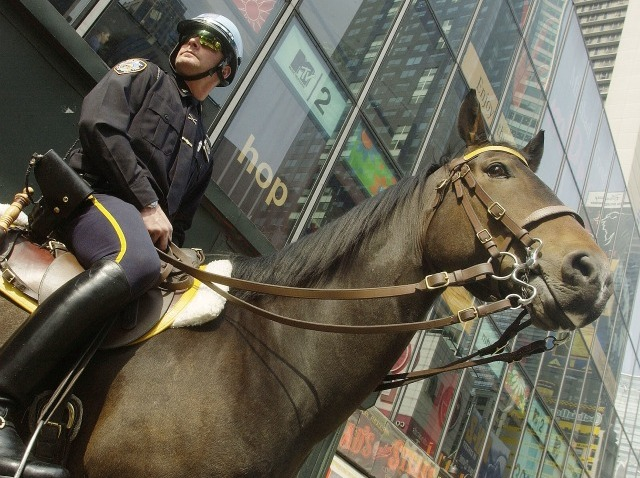 police horse 2