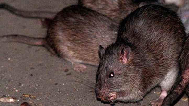 rats-generic722