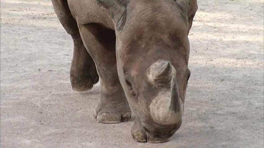 rhino-102513