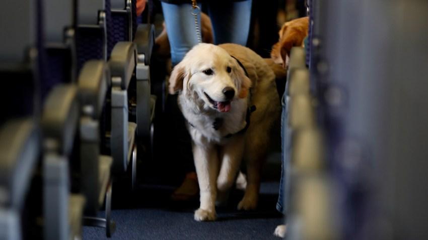 Animals on Planes