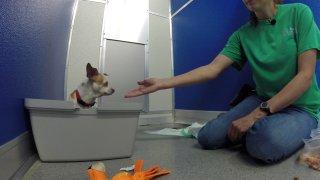 spca dog rehab program