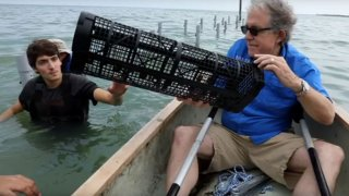 oyster farming cage