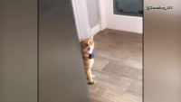 Viral: Cat Greets Family in Southern Accent