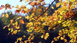 weather generic fall leaves 4