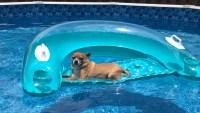 Dog Days of Summer 2020 – Gallery V
