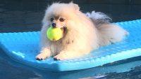 Dog Days of Summer 2020 – Gallery VI