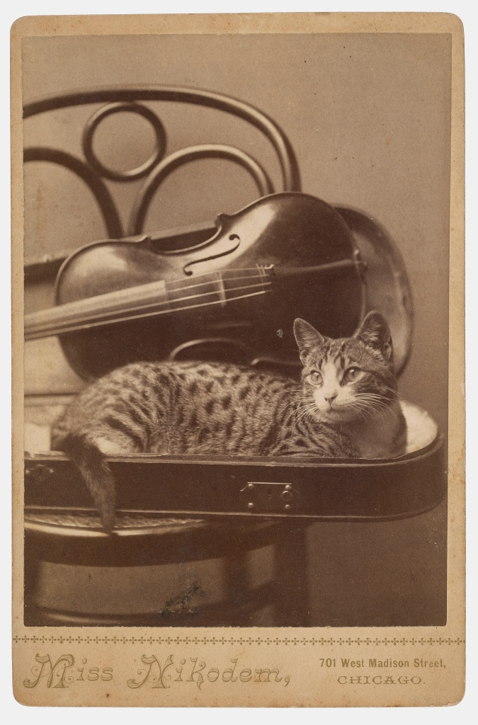 A.M. Nikodem Cat cabinet card