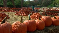 'Art of the Pumpkin' Featuring 90,000 Pumpkins Opens at the Dallas Arboretum