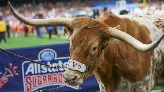 """""""Bevo"""", the Texas Longhorn mascot during the Allstate Sugar Bowl game between the Georgia Bulldogs and the Texas Longhorns on Jan. 1, 2019 at the Mercedes-Benz Superdome in New Orleans, Louisiana."""