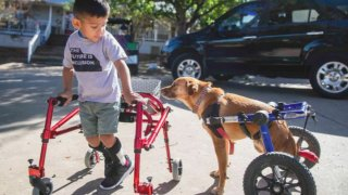 """Ace Ruela-Jimenez, with Frances the dog, right, from CBS' """"That Animal Rescue Show."""""""