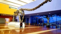 Facebook Grant Funds High-Tech Exhibit at Fort Worth Museum of Science and History