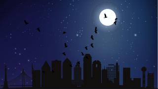 Birds migrating through Texas